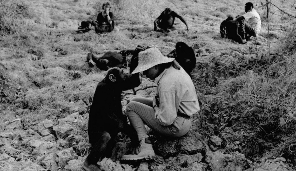 Linda Duberley In River Gambia National Park Chimpanzee Project .. 1988